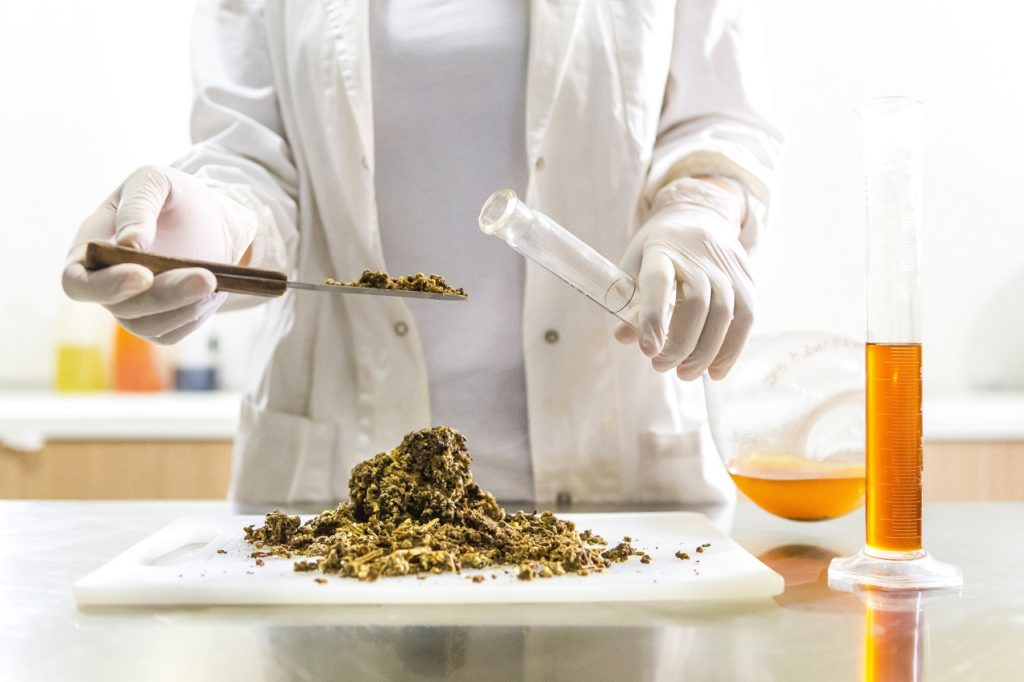 Doctor scooping cannabis representing cannabis in Minas Gerais.