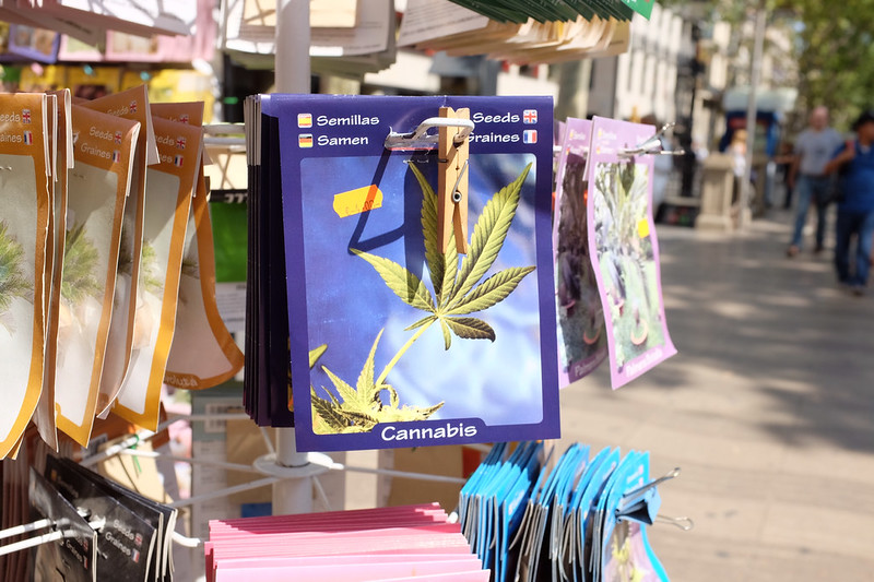Cannabis laws in Spain reflect the global legal limbo of cannabis